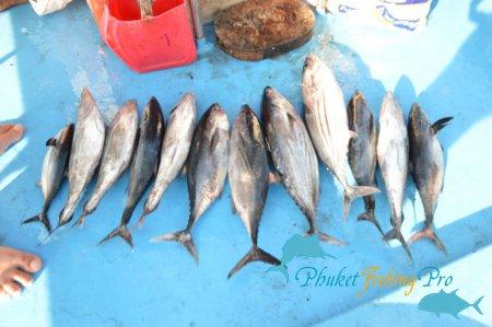 Семейная рыбалка (Остров Рача Яй)