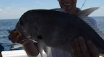 Another GT we catch today